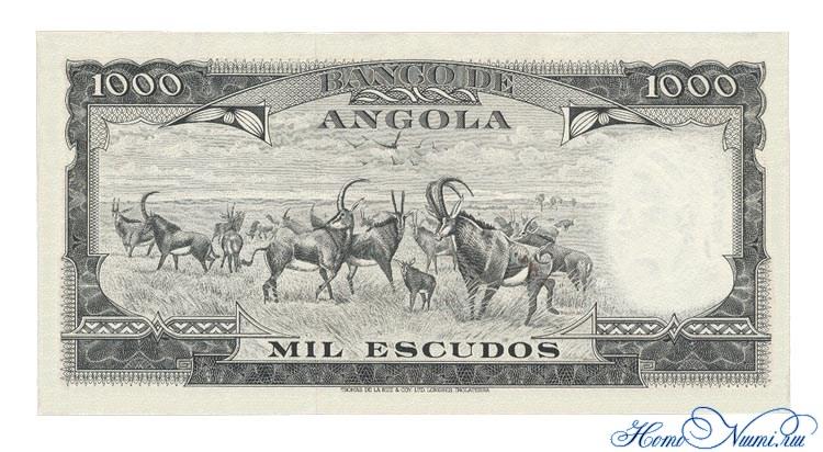 http://homonumi.ru/pic/n/Angola/P-91-b.jpg